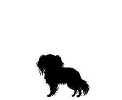 Hundfrisör Hunter Stockholm - liten hund