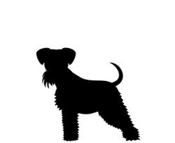 Hundfrisör Hunter Stockholm - mellan hund