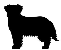 Hundfrisör Hunter Stockholm - stor hund